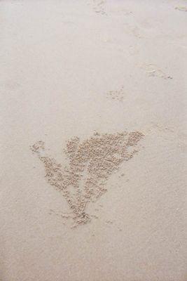 Krabbenmuster am Strand
