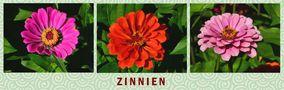 Kräftige Blütenfarben von Günter Walther