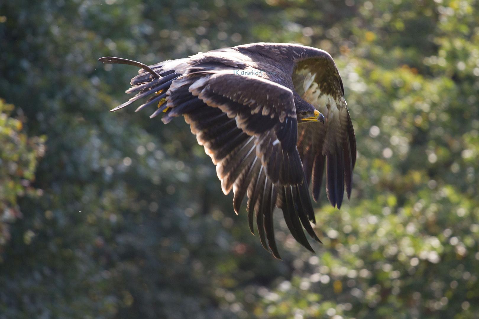 Kräftiger Flügelschlag