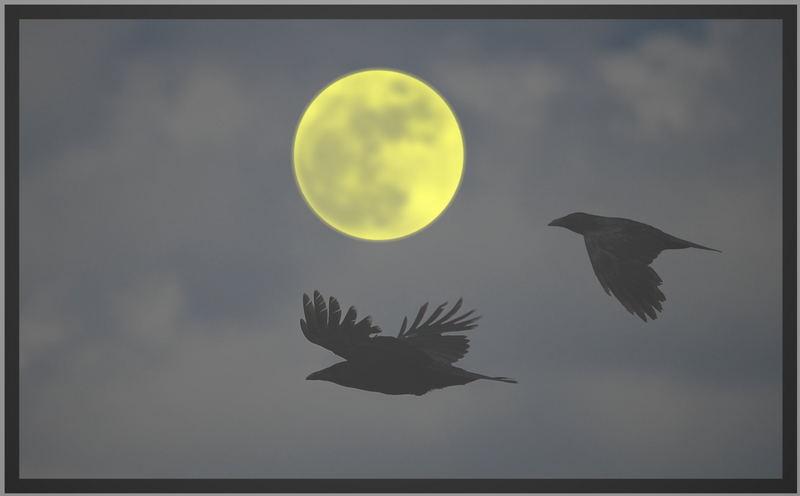 Krähen bei Nacht