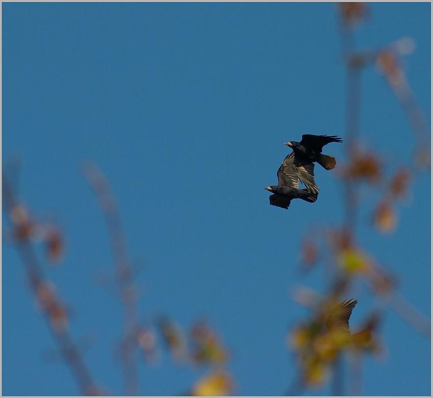 Krähen im Herbst