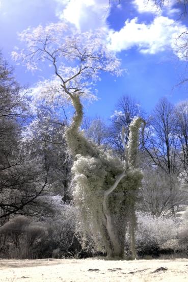 Kranichbaum