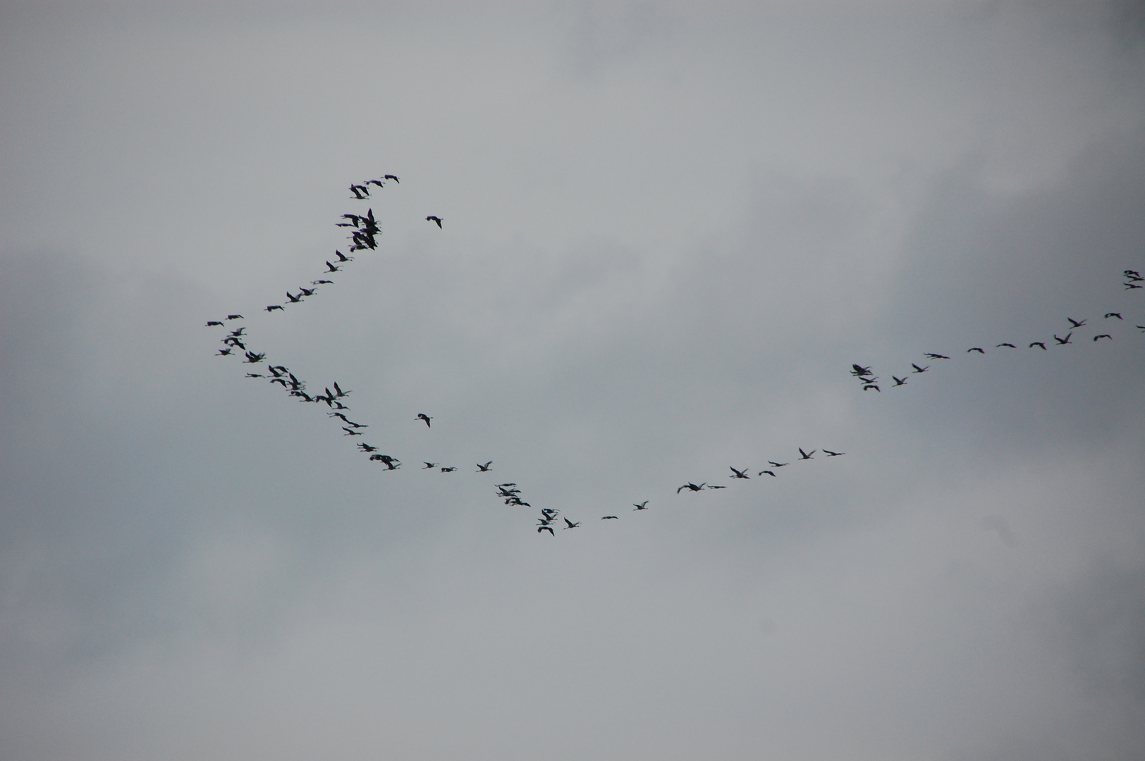 Kraniche oder Wildgänse? - eben durchs Kinzigtal geflogen