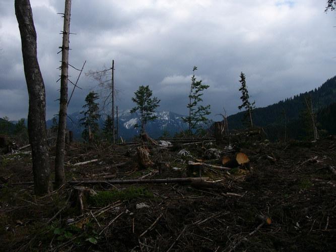 Kranker Wald