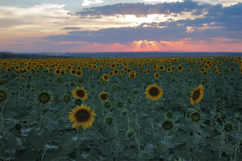 Krasnyj Luch, Ukraine