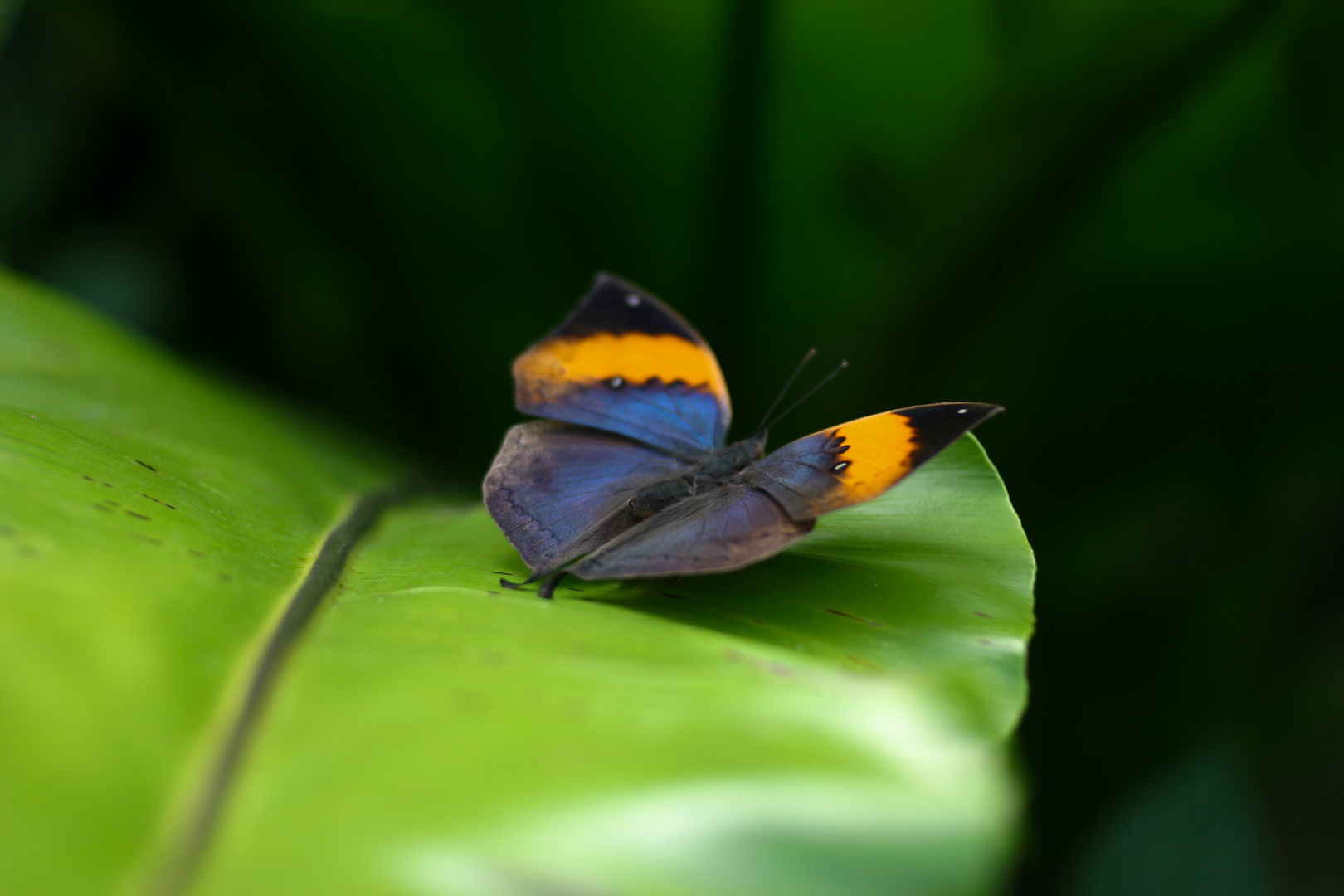 Krasser Schmetterling ;)