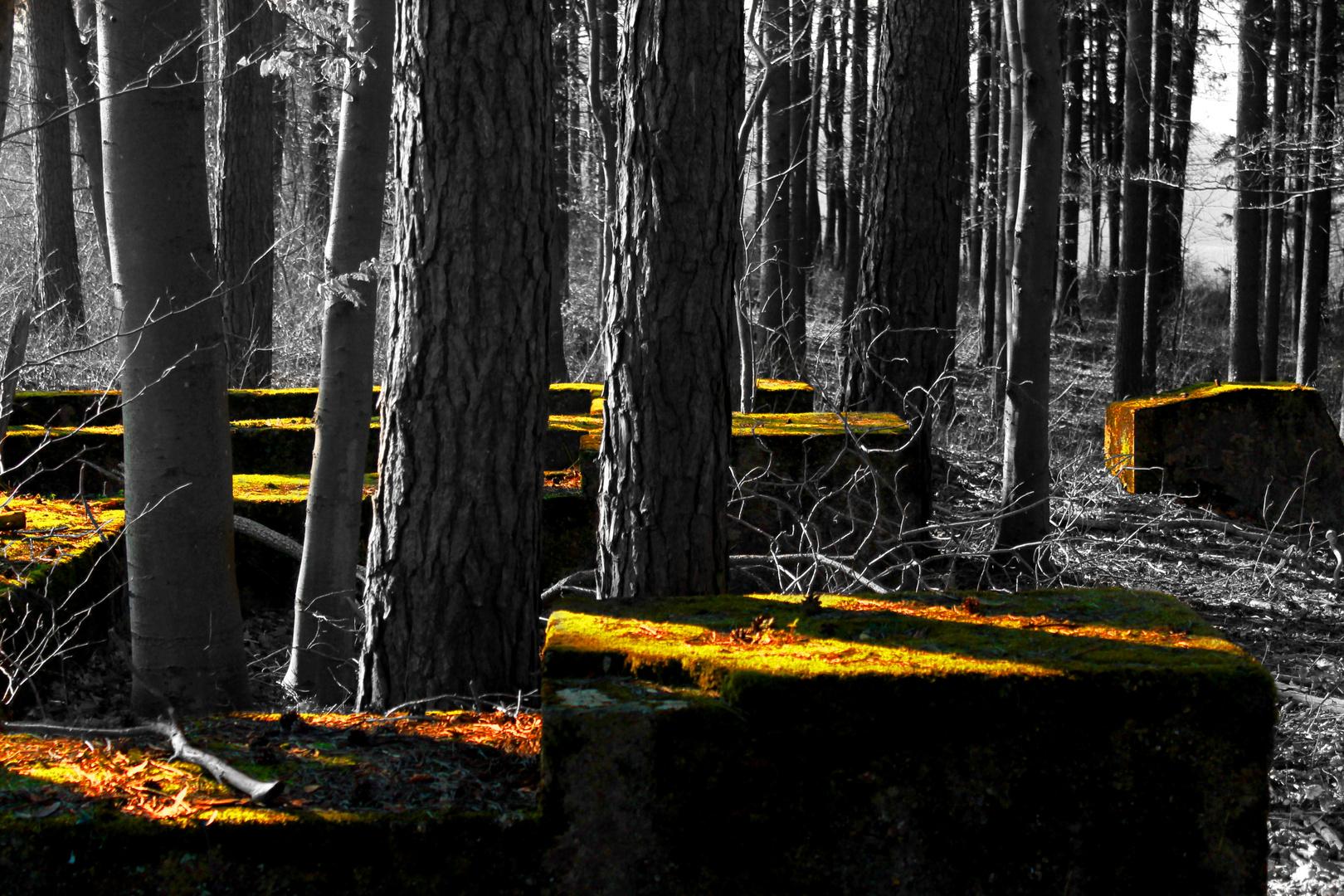Kreativ im Wald