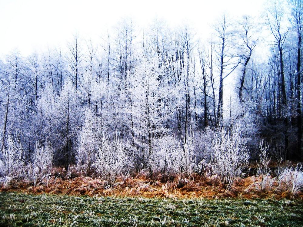 Kreatives Schauspiel der Kalten Jahreszeit