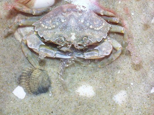 Krebs und Krabbe