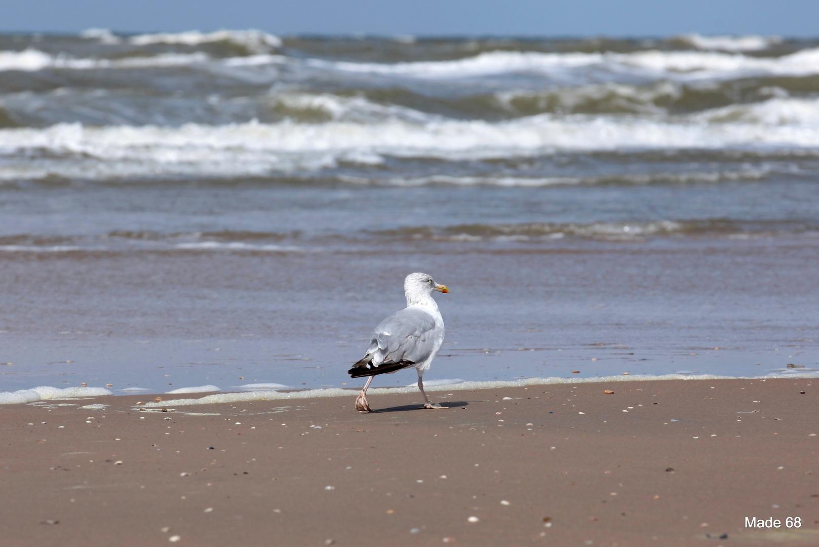 krebse gibts nicht in der luft oder (Strandspaziergang) :-)