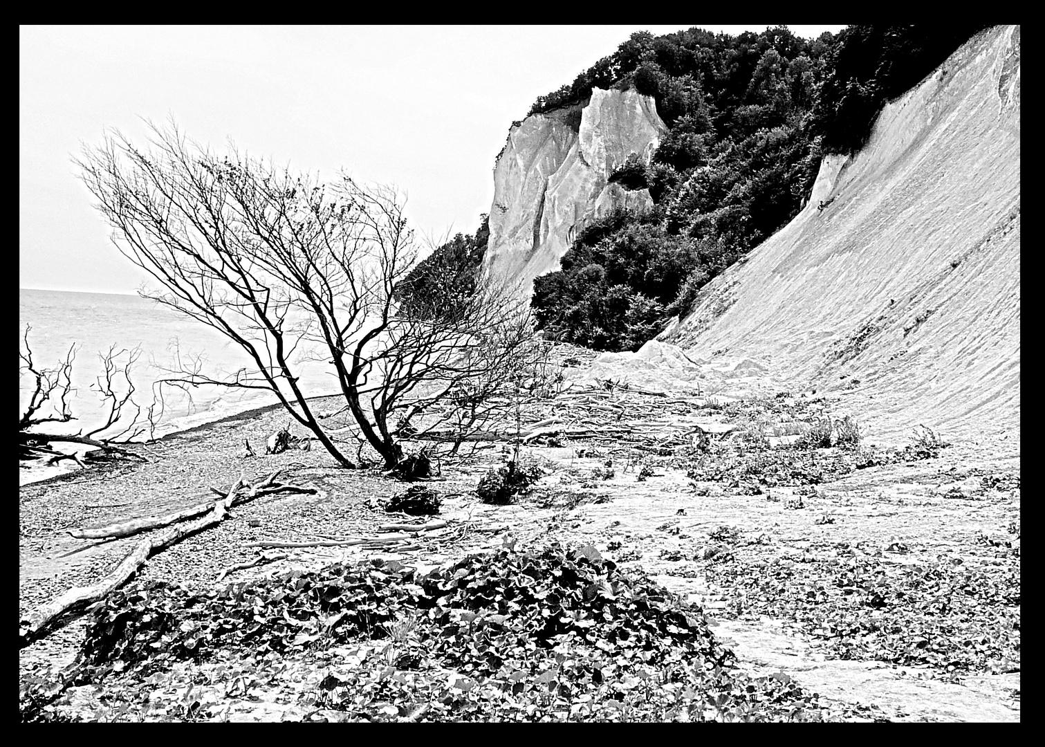 Kreidefelsen auf der Insel Moen