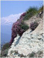 Kreta blüht