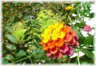 Kreta Blühte