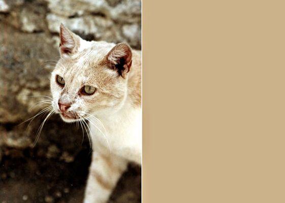 Kreta Katze