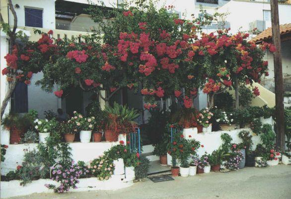 Kreta/Bali Blumenhaus
