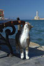 Kretas Katzen