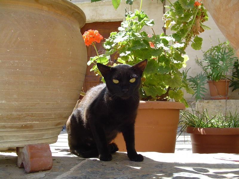 Kretische Katze