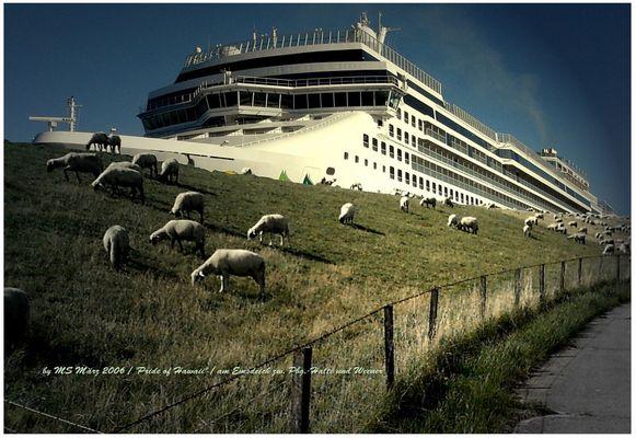 Kreuzfahrtschiffe bei uns in Ostfriesland...