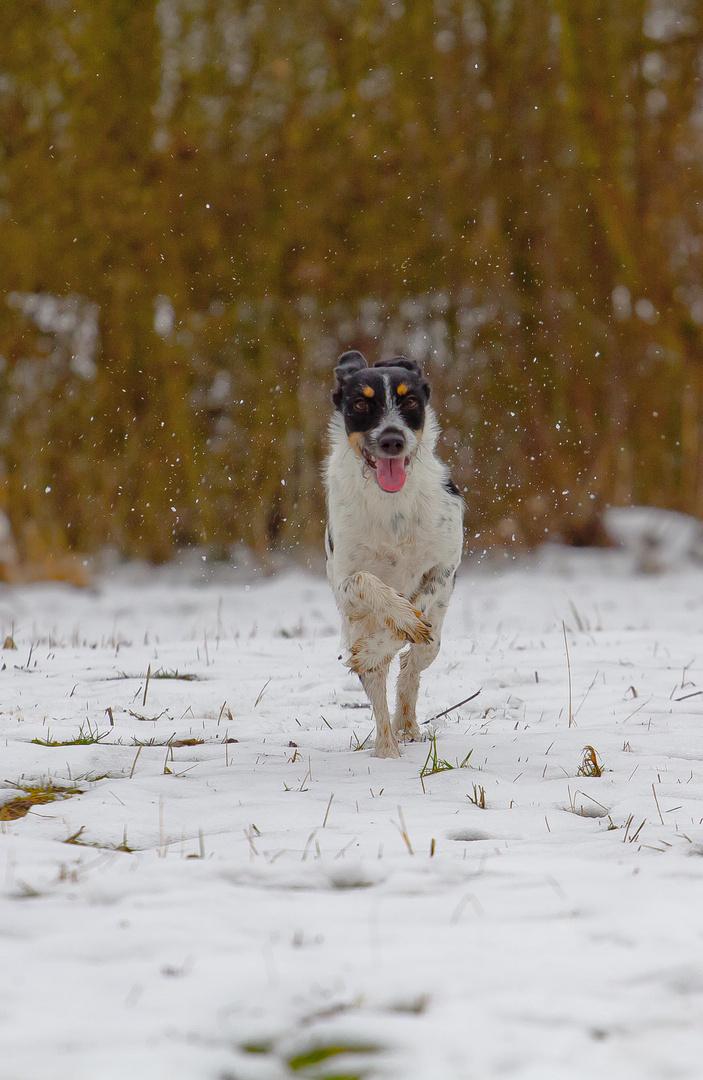 kreuzpfotenhundin