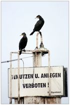 kriminelle köln-kormorane