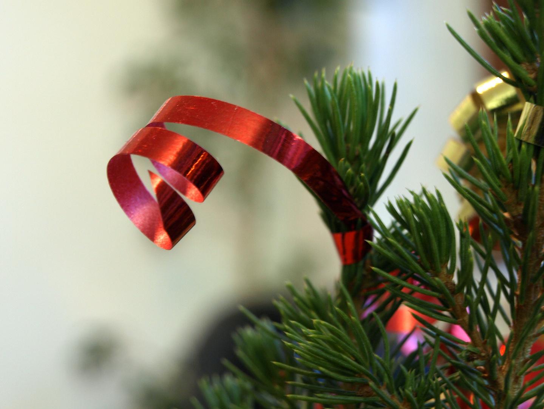 Kringelband an Weihnachtstanne