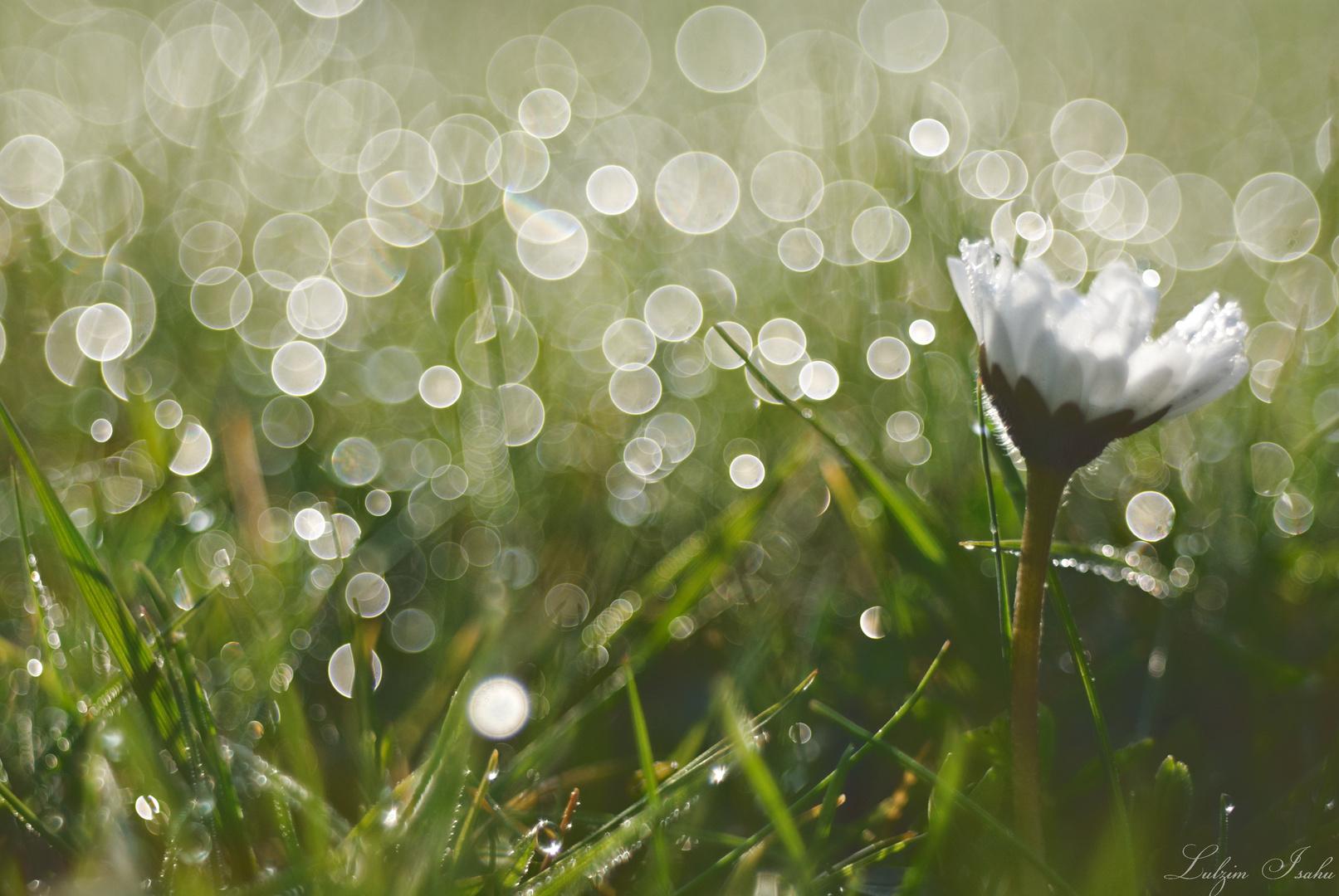 Kringelbokeh seifenblasen foto bild techniken bokeh for Seifenblasen auf englisch