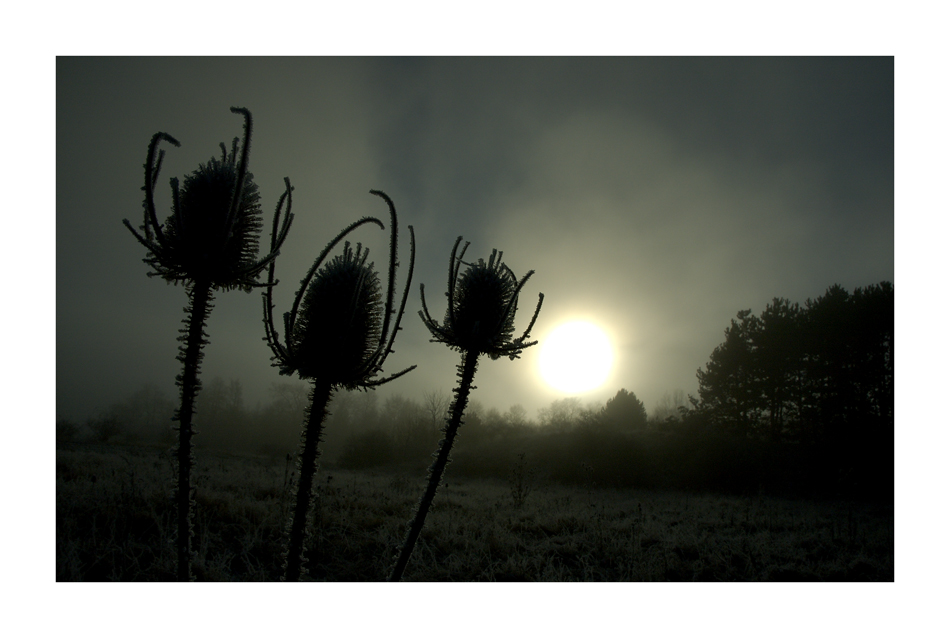 Krippenspiel: Die Heiligen Drei Könige auf dem Weg zum Morgenstern