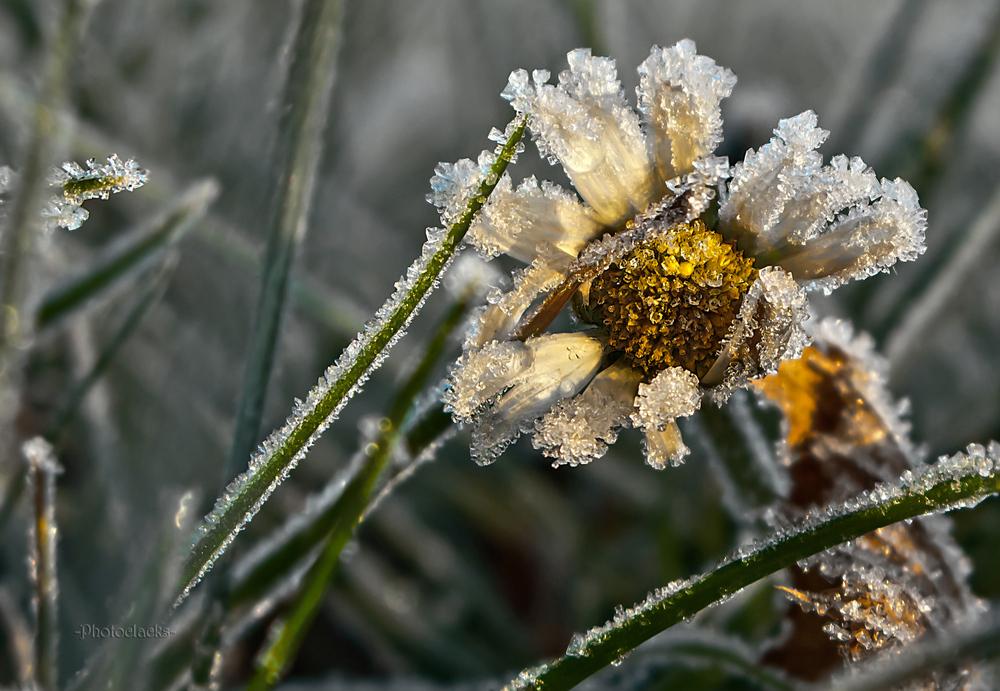 Kristallblume II