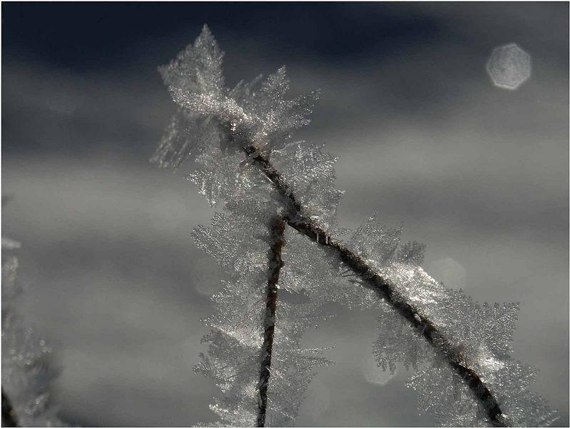 Kristalle aus Schnee...