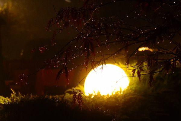 Kristalle leuchten am Strauch