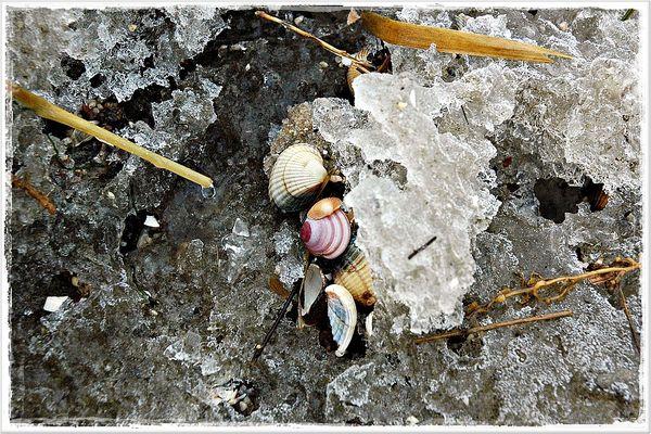 kristallgesäumtes Strandgut