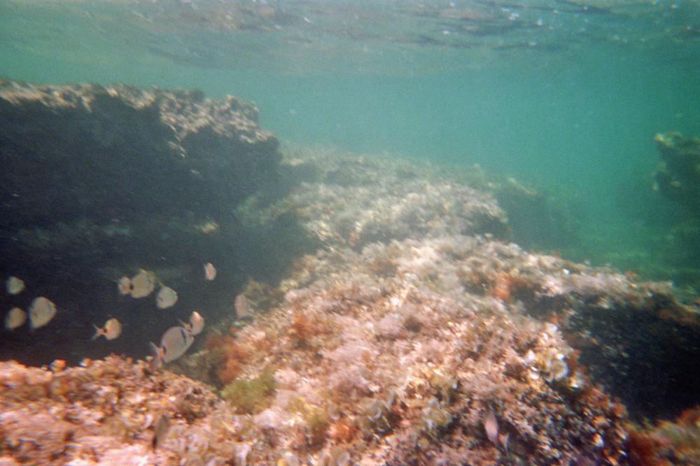 Kroatien`s Unterwasserwelt