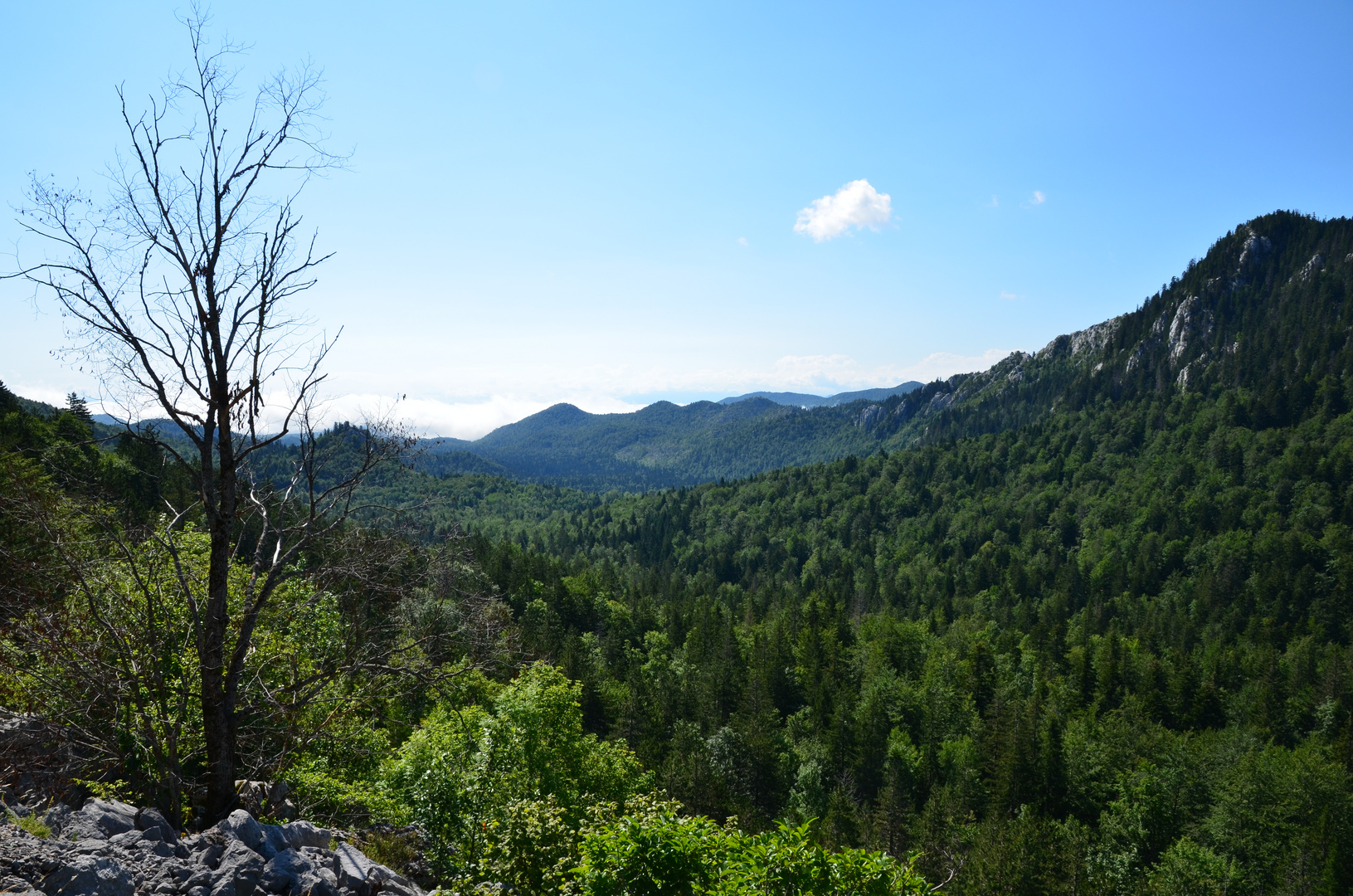 Kroatischer Wald