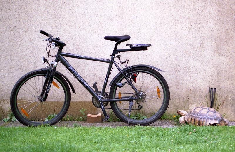 Kröte und Rad