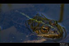 Kröten im Biotop am Karlsfelder See
