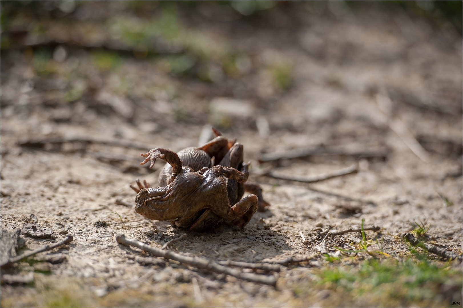 Kröten Kamasutra