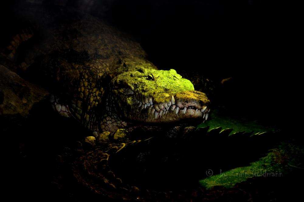 - Krokodil -