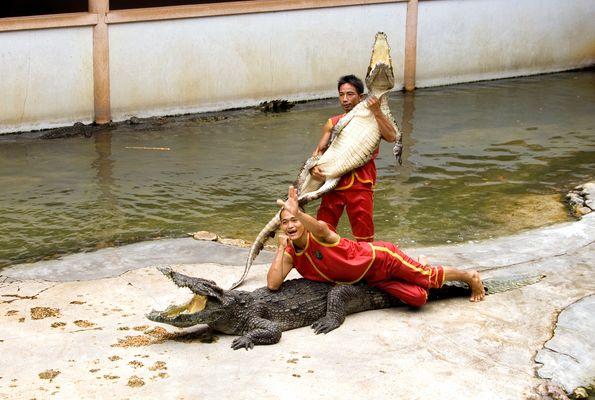 Krokodil-Domteure 2