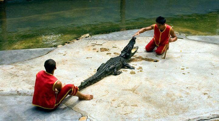 Krokodil-Domteure