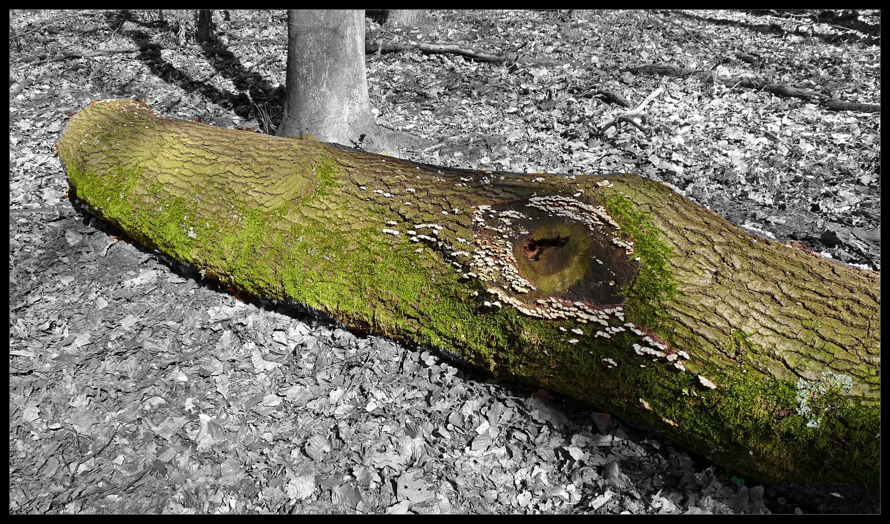Krokodil im Wald