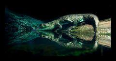 Krokodil Nachwuchs