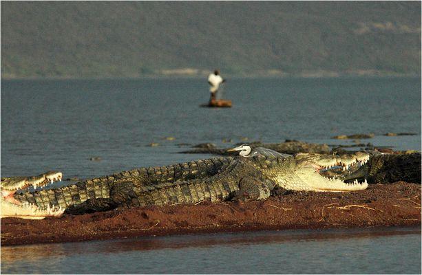 Krokodile im Chamosee