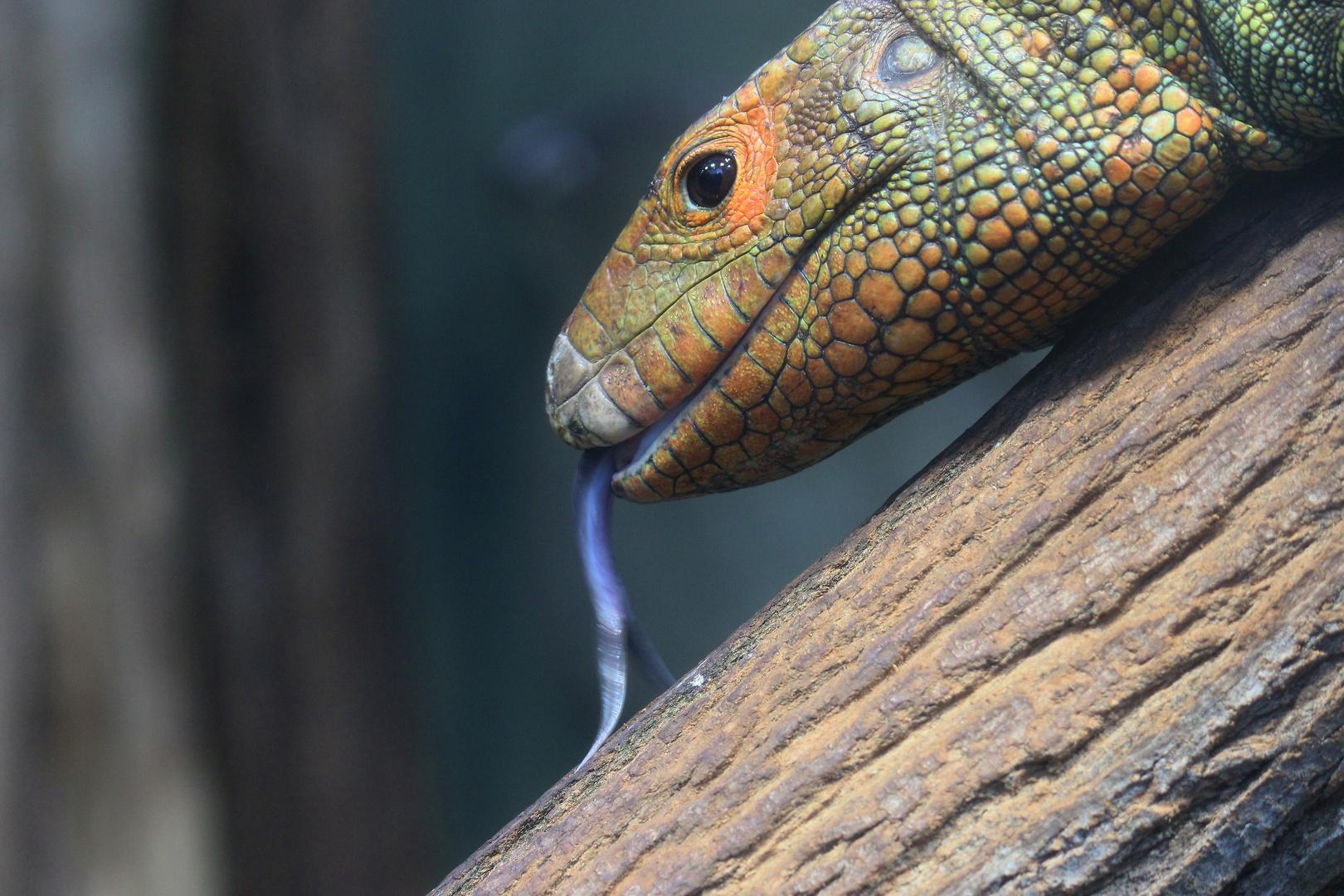 Krokodilteju im Zoo Leipzig