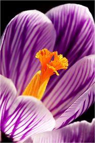 03/05 Frühlingsblüten