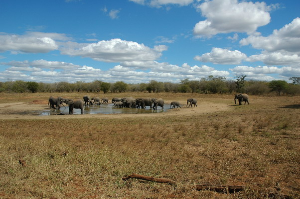 Krüger National Park - Nkaya Pan