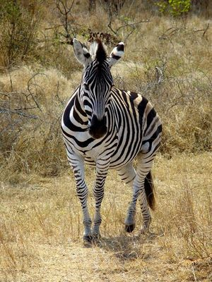 Krüger Nationalpark SA