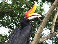 Kuala Lumpur Bird Park - Hornbill von Jürg Scherrer