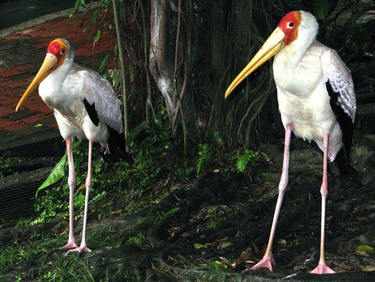 Kuala Lumpur - Taman Burung Bird Park