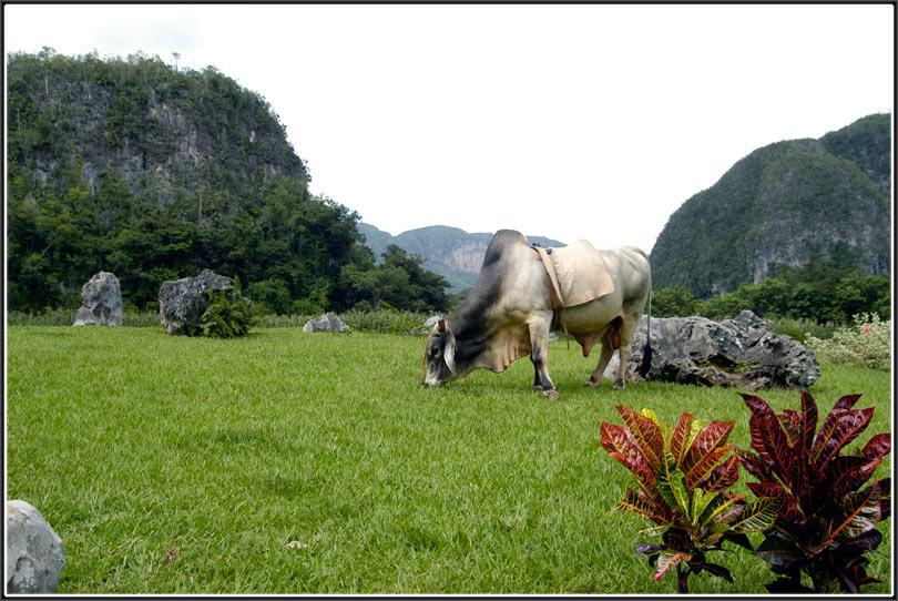 Kubanische Idylle