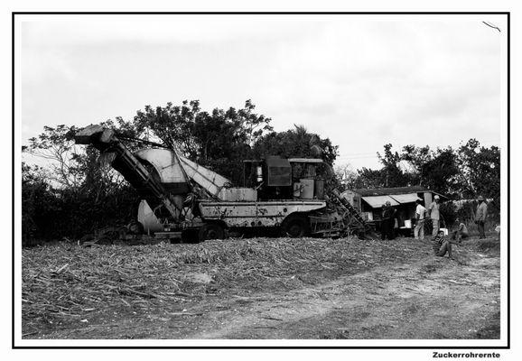 Kubanische Zuckerrohrernte